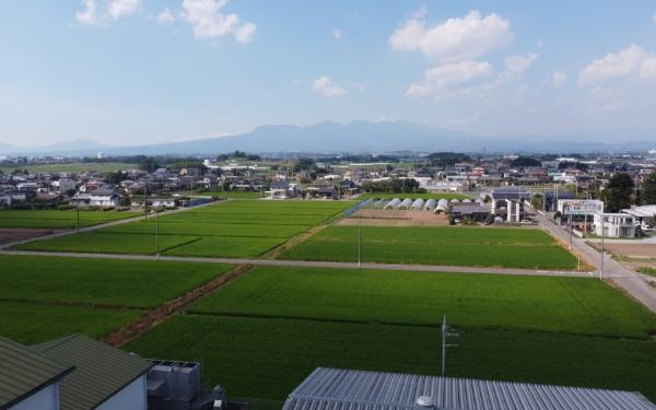JA佐波伊勢崎で生産している主要な野菜